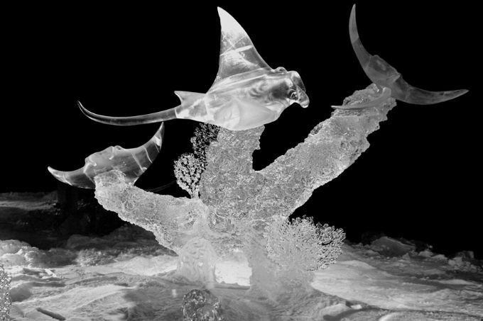 Flying Ice Rays - from 2004 International Ice Carving Championships, Fairbanks, Alaska